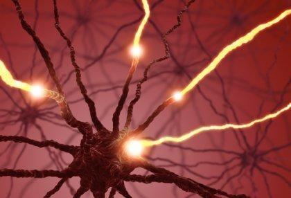 la neurogenèse : les neurones et les axones