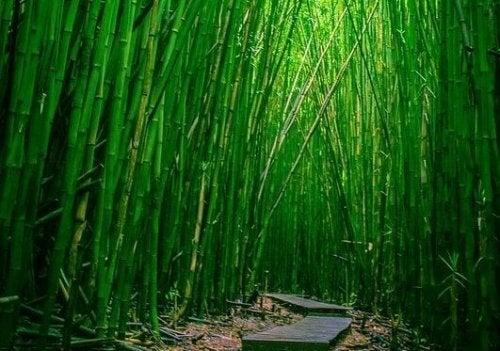 être comme le bambou