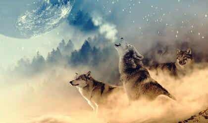 La médecine du loup selon les natifs américains