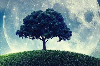 La parabole de l'arbre qui ne savait pas qui il était