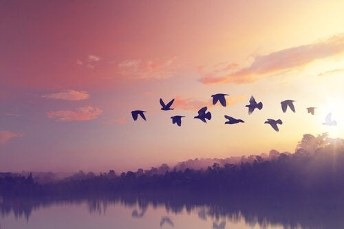 légende de l'oiseau toh