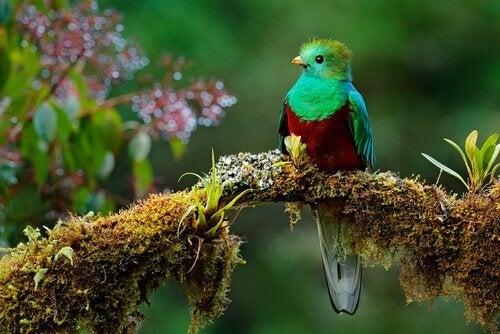 La belle légende de l'oiseau Toh