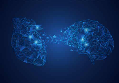 Le modèle d'intégration neuro-viscérale : la connexion cerveau-coeur