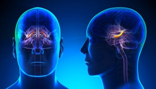 relation entre hippocampe et estime de soi