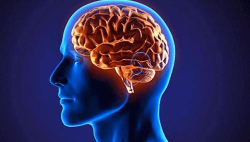 glutamate et cerveau