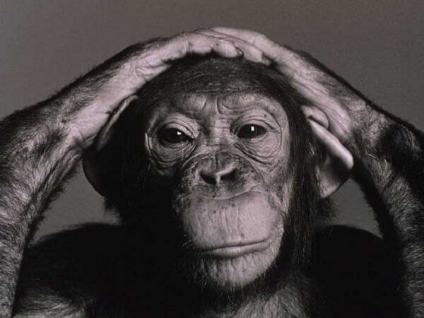 Wolfgang Köhler et son étude des chimpanzés