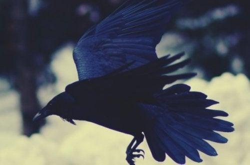 Sedna et le corbeau