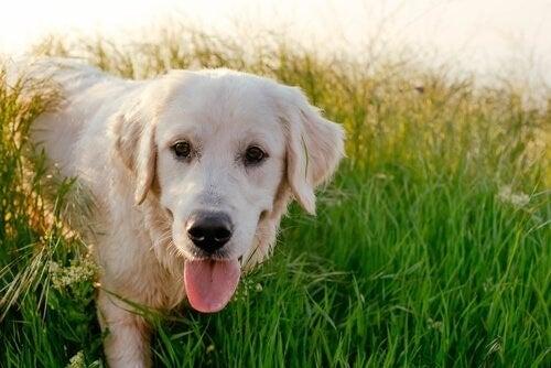 histoires de chiens : Salty