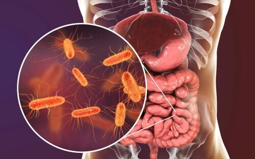 microbiome intestinal et microbiome cérébral
