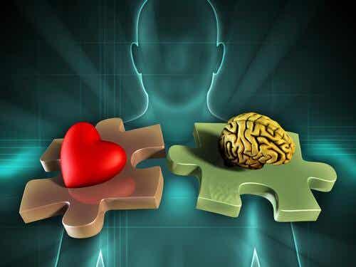 La neuroanatomie des émotions