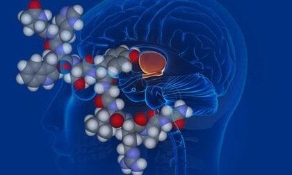La vasopressine, ou l'hormone antidiurétique