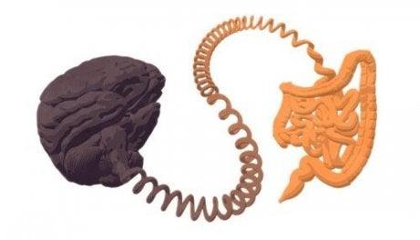 cerveau et intestin