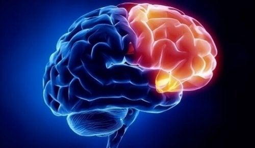 région cérébrale de la culpabilité