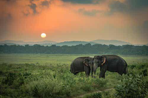La tristesse des éléphants, une histoire vraie