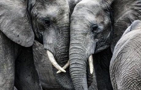 la tristesse des éléphants est une histoire vraie
