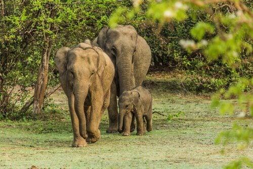 tristesse des éléphants et Lawrence Anthony