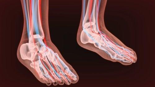 nerfs du pied et neuropathie périphérique