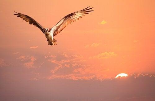 L'oiseau qui ne savait pas qui il était, une histoire sur l'identité