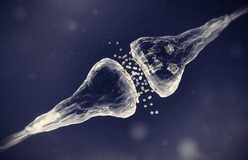 synapses électriques