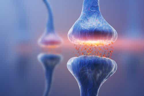 Types de synapses: la communication neuronale