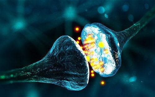 synapses chimiques