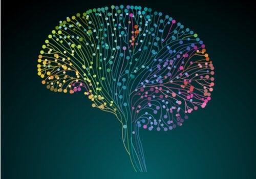 Le Projet du connectome humain : découvrir notre cerveau en profondeur