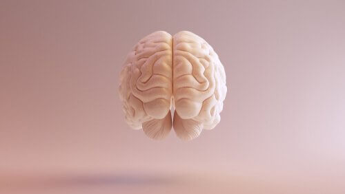 tronc cérébral