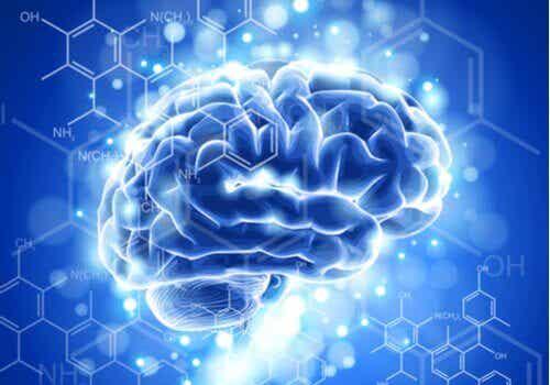 La neuroéthique : caractéristiques et développement
