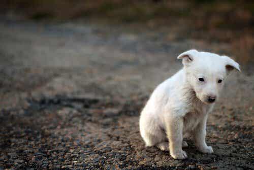 La conscience de la souffrance chez les animaux
