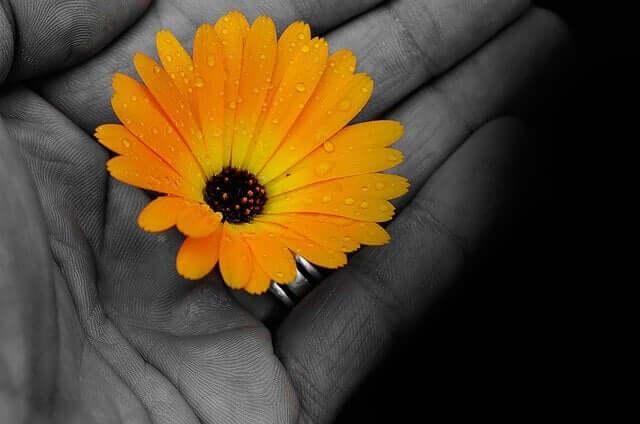 fleur jaune dans une main