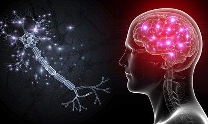 Les cellules OLM : les neurones qui nous aideront à traiter l'anxiété grave