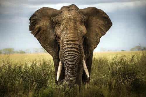 Les six sages aveugles et l'éléphant : un conte pour valoriser les opinions des autres