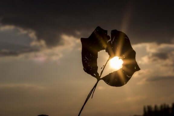 feuille avec un trou en forme de coeur où passe la lumière du soleil