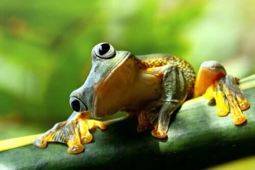 Une grenouille qui penche la tête