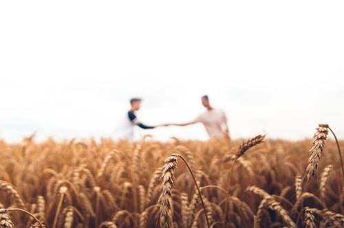 Deux hommes dans un champ de blé