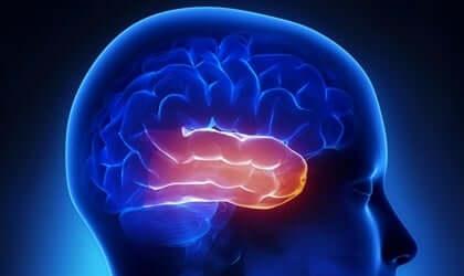 Le lobe temporal et le syndrome de Klüver-Bucy