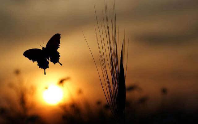 Un papillon qui vole au lever du soleil