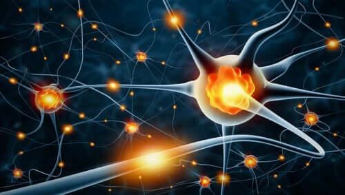 L'activité nerveuse dans le cerveau