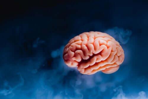 Un cerveau, objet de l'expérience de Dutton et Aron
