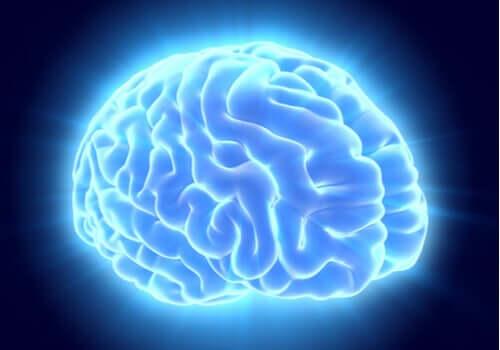 L'image d'un cerveau illuminé