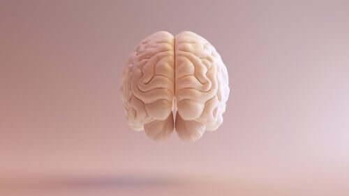 L'imagerie d'un cerveau humain