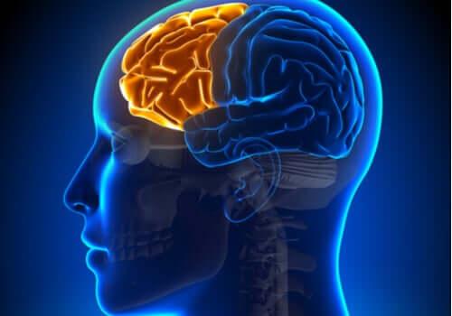 Syndrome dysexécutif : en cas de défaillance du lobe frontal