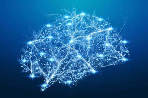 L'amygdale cérébrale en schéma lumineux
