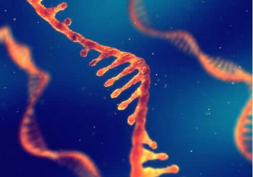 Peut-on hériter d'un savoir via l'ADN ?