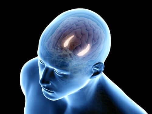 Le fonctionnement de la mémoire déclarative