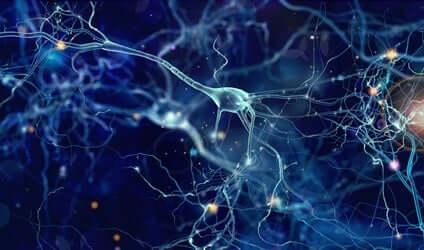 Les neurones dans le cerveau