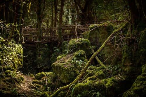 Merlin vit dans les bois