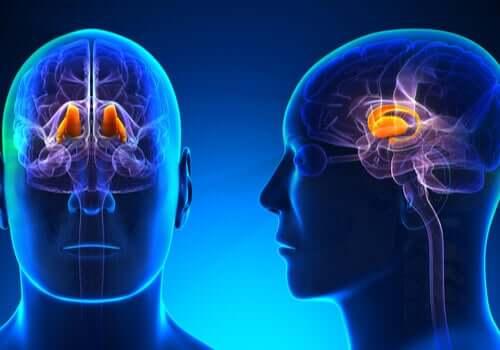 Comment le cerveau humain perçoit-il la température ?