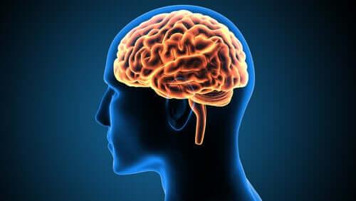 Victor Leborgne, un cas clinique qui a changé les neurosciences