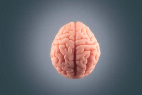 Un cerveau sur fond gris